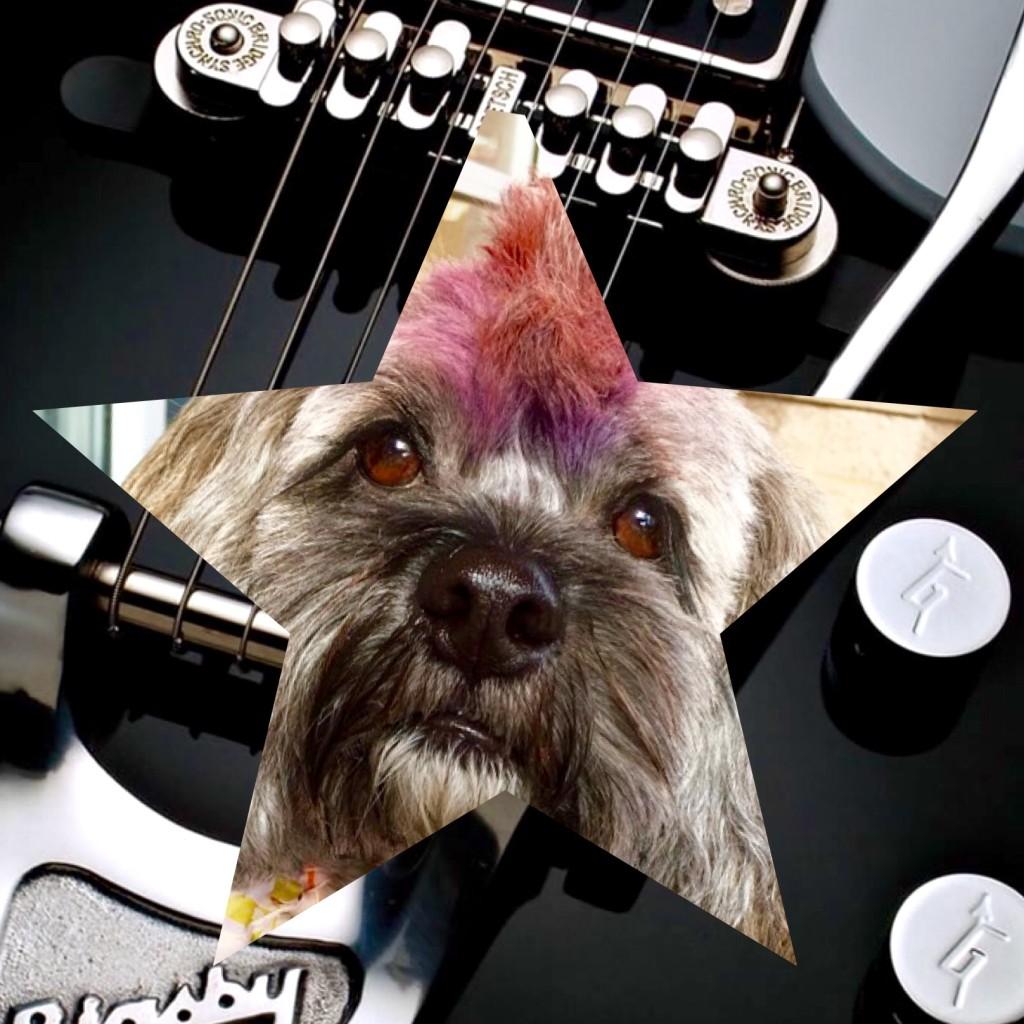 Mr. Twix Rockstar Dog