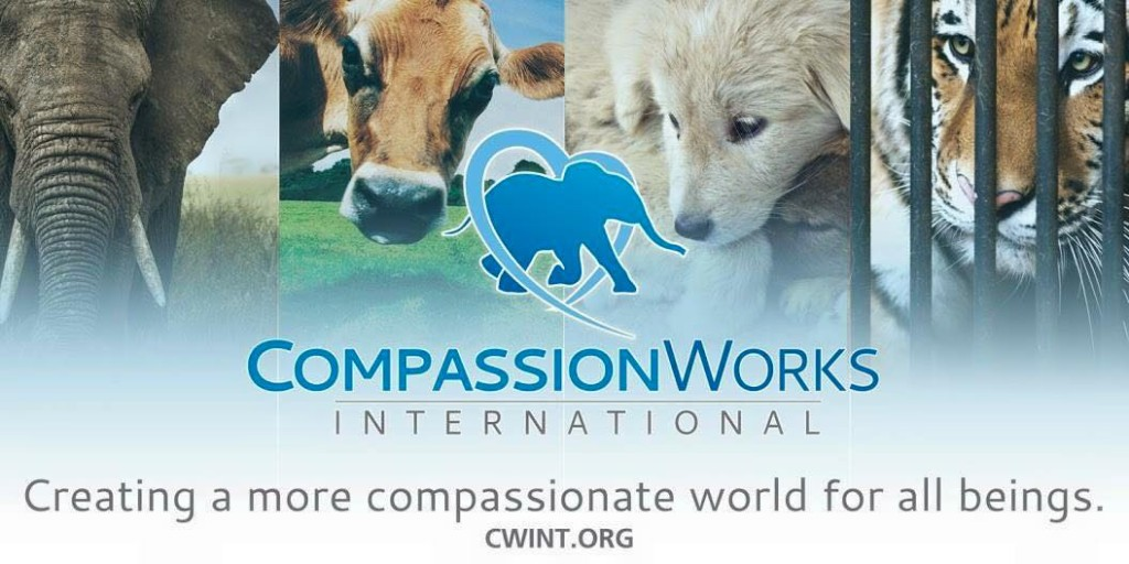 Worldwide Rally Cecil Compassion Works International
