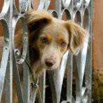 Pet loss prevention