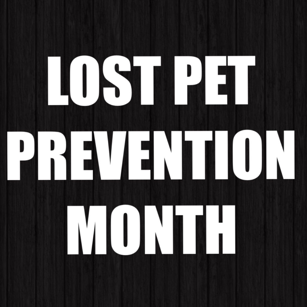 lost pet prevention month The Rock n Roll Dog