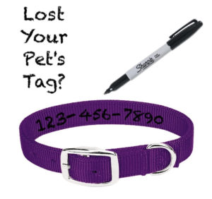 Write your pet's info on it's collar if the tag falls off. save the heartache of a lost pet