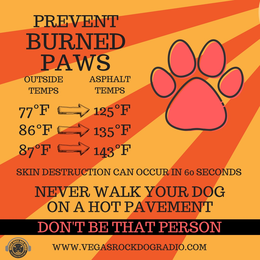 Protect Your Pet's Paws During The Summer